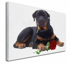 More details for rottweiler dog with a red rose x-large 30