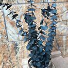 5x Dried Flower Natural Eucalyptus Branch Plant Eternal Leaves DIY Home Decor US