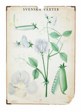 EARLY 20TH CENTURY SWEDISH PAINTED BOTANICAL POSTER
