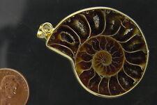 BUTW Gold Electroformrd Ammonite nautiloid fossil pendant necklace jewelry 7161P