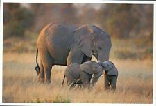 Elephant and Twins, Calves, Mammal of Africa, Baby --- Modern Animal Postcard