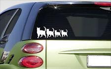 """CAT family *E988* 8"""" sticker cats kitten catfood catnip litterbox scratching"""