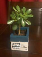 The Office Dunder Mifflin Company Copy Paper Ream Box Desk Planter Plant Vase