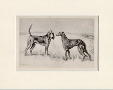 More details for bloodhound & deerhound rare 1897 antique dog print arthur wardle ready mounted