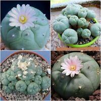 Astrophytum Mix Cactus seeds~rare and exotic cacti