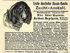 Arthur Seyfarth Köstritz RASSE-  HUNDE- ZUCHT- ANSTALT Historische Reklame 1901