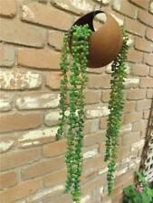 2 stems String of pearls Artificial Sedum succulent  hanging Vertical Garden New