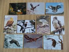Swap playing cards    10  Modern Wides Eagles  Birds  #EA4