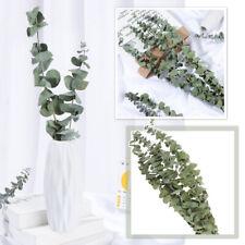 10pcs Natural Dried Flower Eucalyptus Branches Leaves Bouquet Home Decor~UK