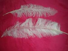lot de 2 plumes autruche blanche 50 cm