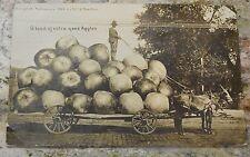 1909 William H Martin Exaggeration RPPC Postcard wagonful of APPLES Kansas City