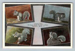 "Ypsilanti MI-Michigan State Normal College Campus Pets ""Squirrels"" Postcard"