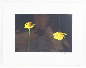Color Photography Daffodils 11x14