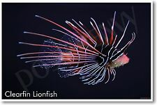 Clearfin Lionfish - NEW Animal Wildlife POSTER