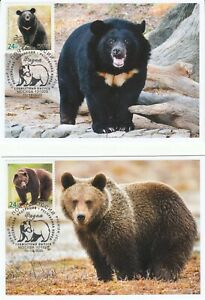 Russia 2020 Fauna European brown bear Asian black bear