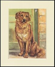 Hovawart Lovely Little Dog Print Mounted Ready To Frame