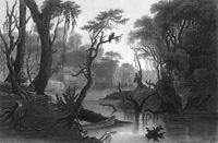 BACKWOODS RIVER SCENE BAYOU CYPRESS TREES SWAMP EAGLE ~ 1854 Art Print Engraving