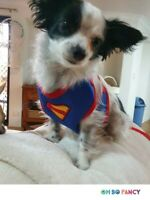 Choke Free Classic Spiderman Dog Harness Vest Collar Leash Pet Puppy Batman