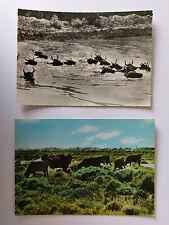 Bulls of Camargue France 2 Vintage Postcards c1960s