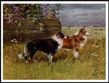 ROUGH COLLIE TWO DOGS IN RURAL SETTING LOVELY VINTAGE STYLE DOG PRINT POSTER