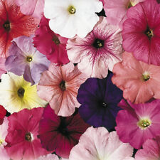 Petunia Flower Seeds, Early to Bloom, Large Fragrant Flowers, Hanging Baskets