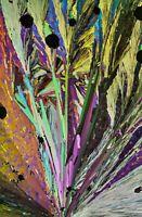 Vintage microscope slide of Caffeine for polarized light