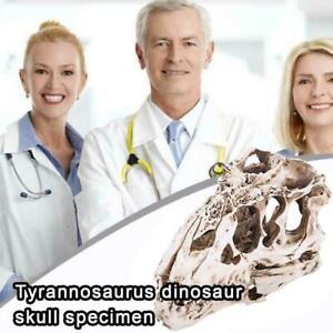 Tyrannosaurus T-Rex Skulls Resin Fossil Model Dinosaur Replica 2021 HOT Z2J3