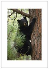 NW Pitney Ink Tree Hugger Humorous Greeting Card, 5 x 7 Inches