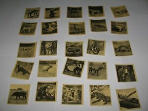 WILD ANIMALS (1954) VERY RARE COMPLETE FULL SET of 50  CBT / KANE PRODUCTS CARDS