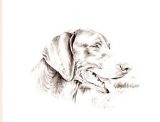 German Shorthaired Pointer Head Study Open Edition Art Print Barbara Walker*