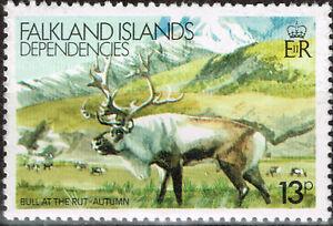 Falkland Islands Fauna Wild Animals Nountain Bull at the rut 1981 stamp MLH