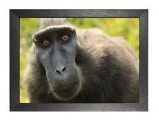 Monkey #7 Poster Funny Black Wild Animal Picture Mammals Photo Ape Print Artwork