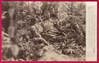 WW2 Japanese Infantry in Jungle Camouflage Original Yomiuri Press Photo