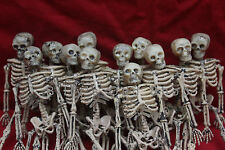 "12 Lot Miniature Dollhouse Plastic Skeletons 6"" inch Small Halloween Decoration"