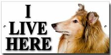 "ROUGH COLLIE,LASSIE DOG ""I LIVE HERE""METAL SIGN,PREMIUM QUALITY DOG WARNING SIGN"
