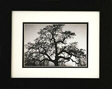 FRAMED Oak Tree and Sunset by Ansel Adams 10x8 Double Matted Art Print