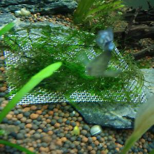 Aquarium Stainless Steel Mesh Pad Fish Tank Aquatic Moss Plant Grass Fixed Decor