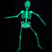 1X Luminous Glow In The Dark Human Skeleton Hanging Halloween Party Skull Decor