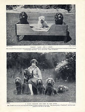 """SUSSEX SPANIEL A WELL KNOW BREEDER AND HER """"EARLSWOOD"""" DOGS OLD 1934 DOG PRINT"""