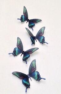 """4 Butterfly Decals Teal Blue Brown Green 5"""" Tropical 3D Butterflies Reusable"""