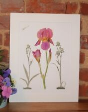 Botanical Giclée Vintage Print (Iris Romance) by RHS artist Alfred Wise