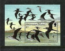 Ascension 598, MNH, Birds: Sooty Tern    Onychoprion fuscatus  1994.x18958