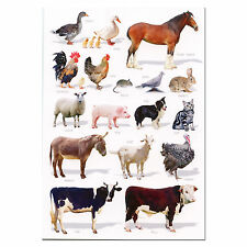 Farm Animals A5 Identification Card Chart Postcard