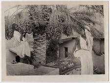 "Lehnert & Landrock UNDER DATE PALM * 50s Print by Lambelet of 1920s Negative ""L"""