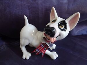 Ornamental English Bull Terrier - Pet with Personality