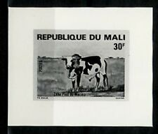 Photo Essay, Mali Sc412 Cow, Cattle.