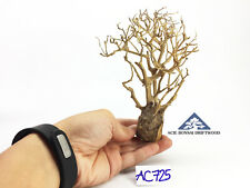Aquarium Bonsai Driftwood Moss Tree for Aquascape Freshwater Planted Tank- AC725