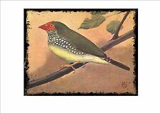 Ruficauda Coral Vintage Placa de pared jaula pájaro imagen Sluis aviario signo