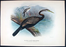 1911,MATHEWS BIRDS OF AUSTRALIA H/C PLOTUS NOVÆ-HOLLANDIÆ, AUSTRALIAN DARTER W5R