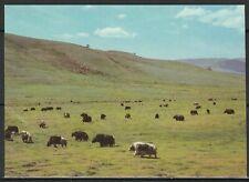 Монголия Открытка Природа Яки 1980-е гг.